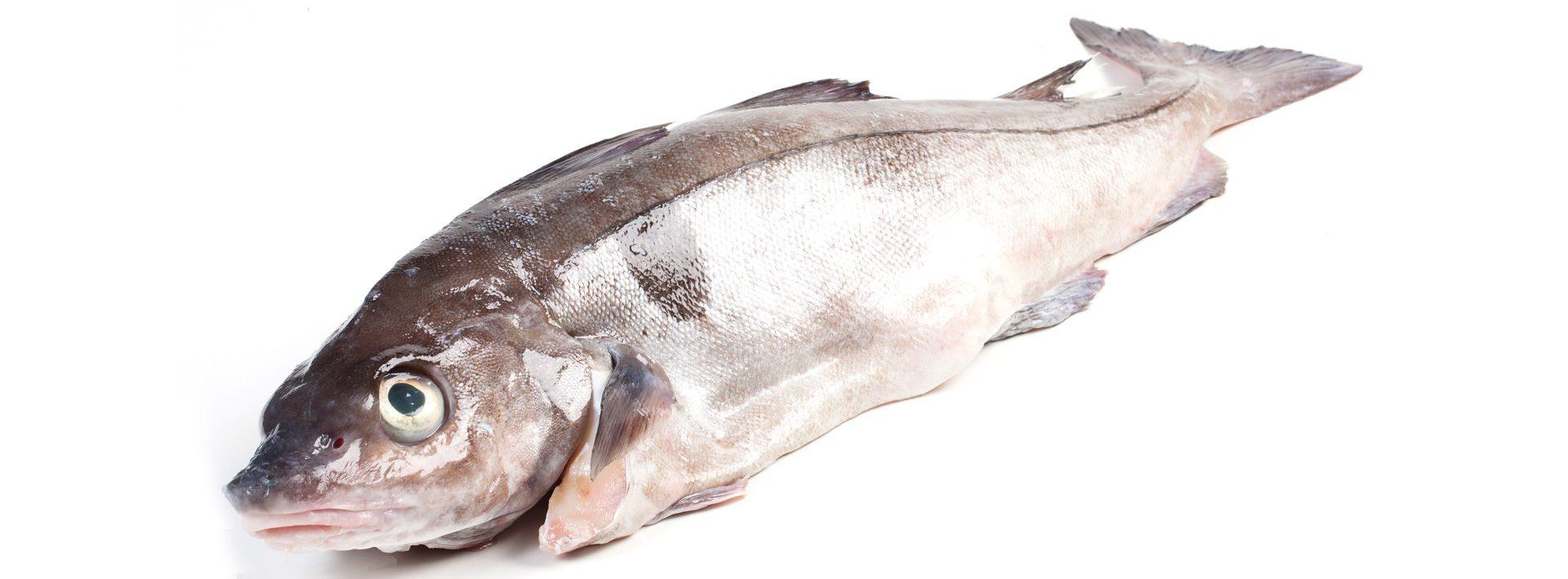 Schelvis - Murko Seafood