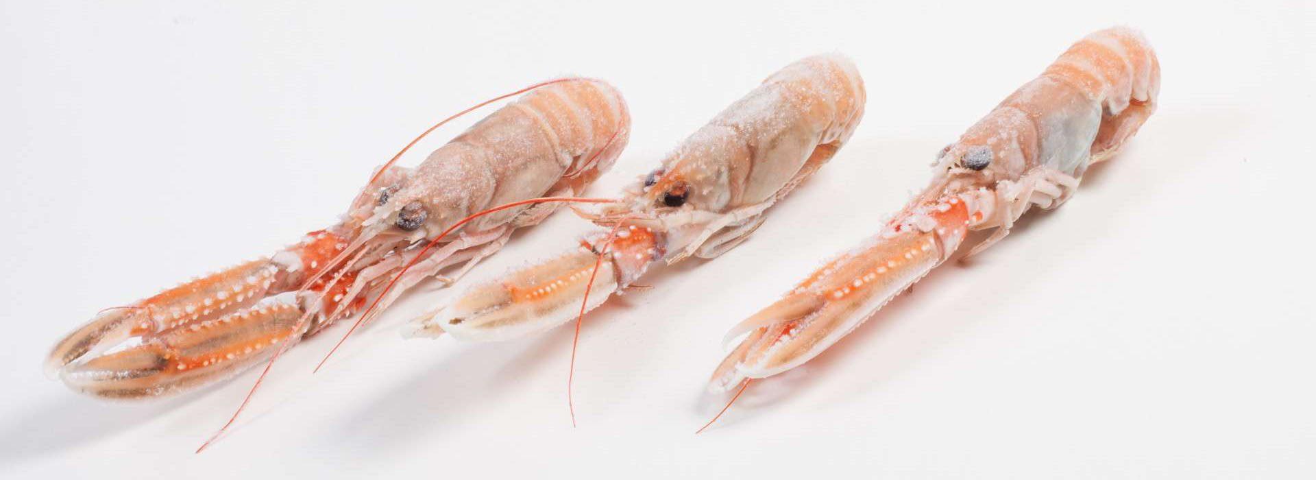 Galerij - Murko Seafood