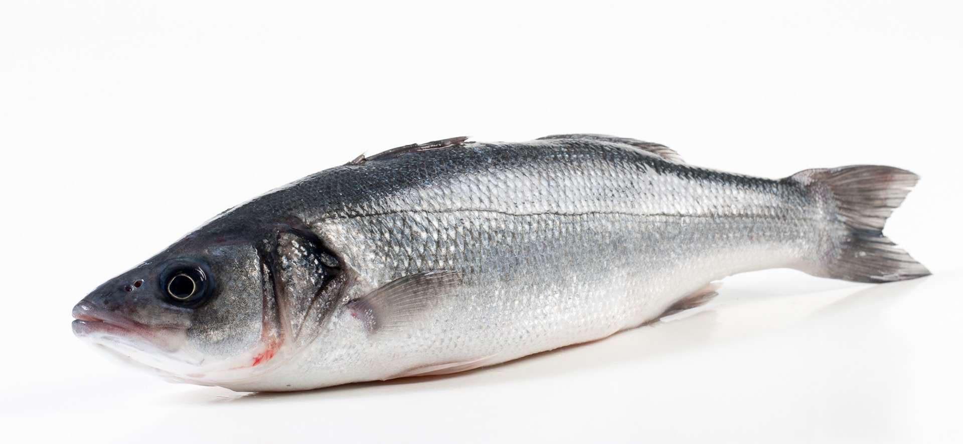 Murko Seafood – Import en export van vis en zeevruchten - Murko Seafood