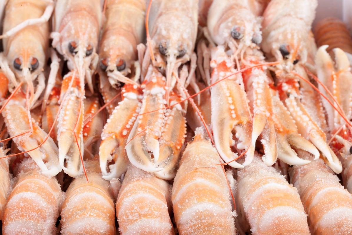 Langoustines - Murko Seafood