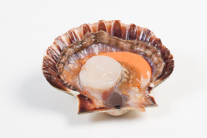 Sint-jacobsschelpen - Murko Seafood