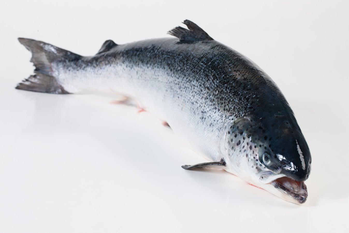 Atlantische zalm - Murko Seafood
