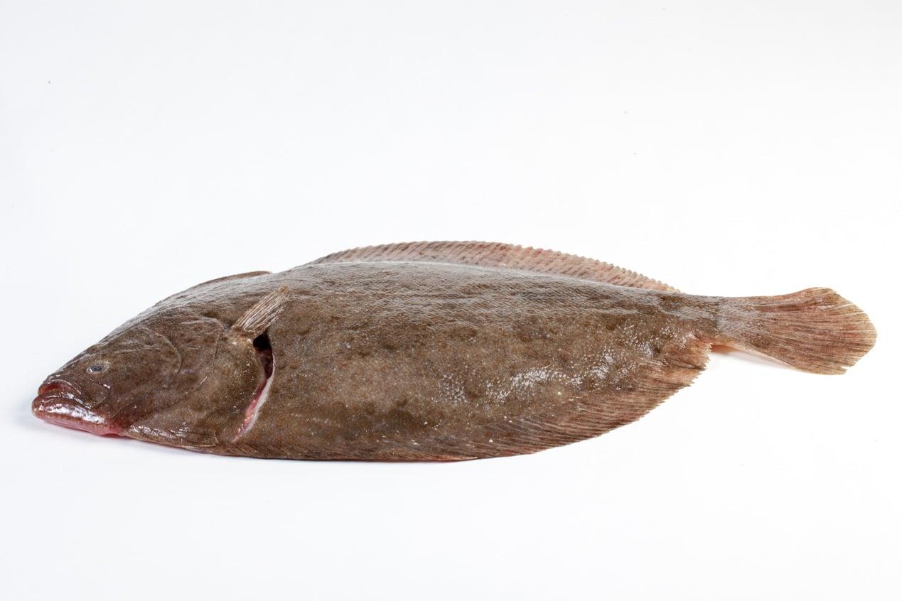Griet - Murko Seafood