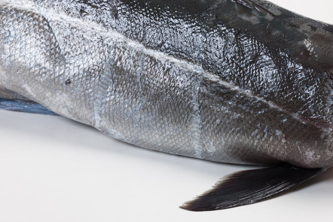 Koolvis - Murko Seafood