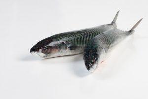 Makreel - Murko Seafood