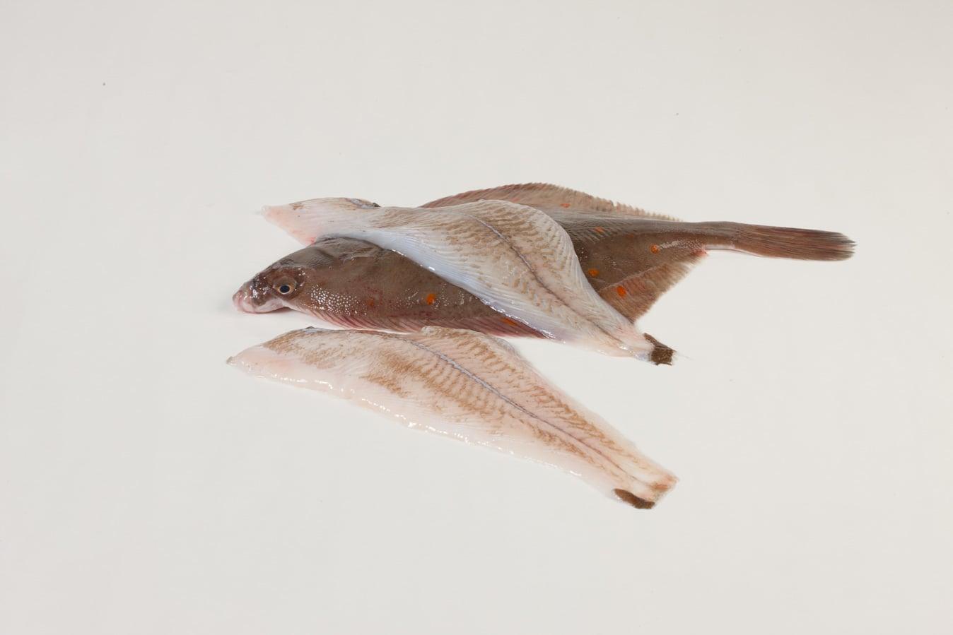 Schol - Murko Seafood