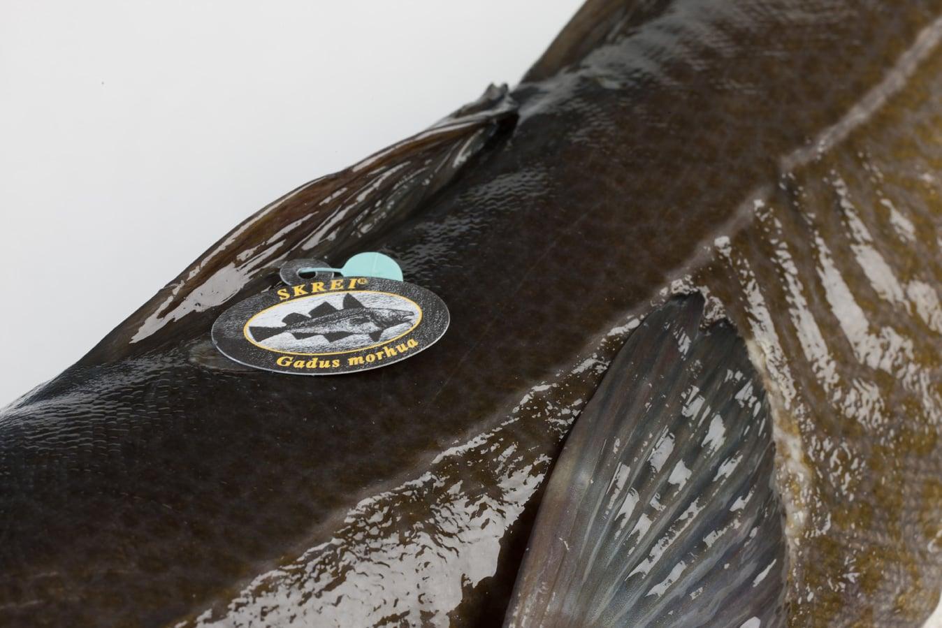 Kabeljauw - Murko Seafood