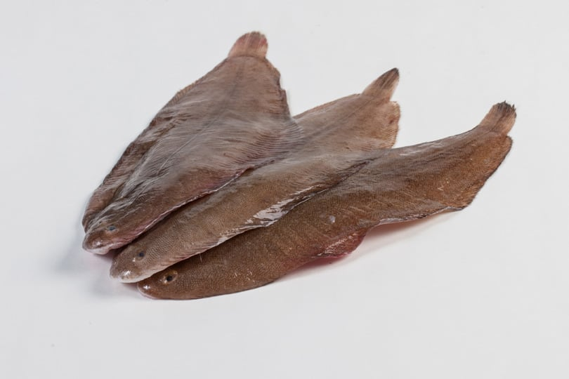 Tong - Murko Seafood