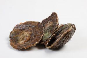 Zeeuwse platte oester