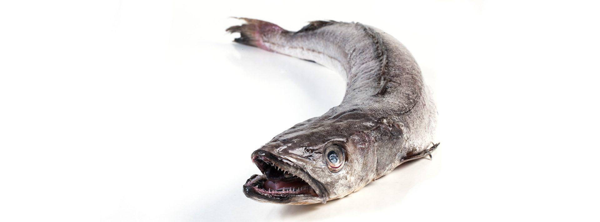 Heek - Murko Seafood